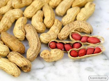 Насіння арахісу (Валенсія Українська, Степняк) ціна за 100 гр./70 грн.