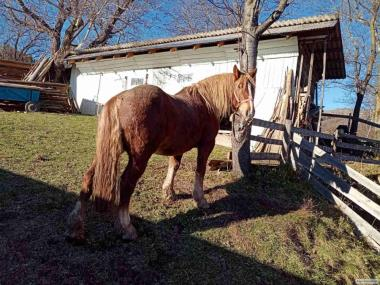 Продам гарного коня