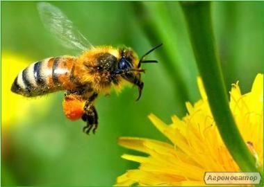 Продам бджолосім ї