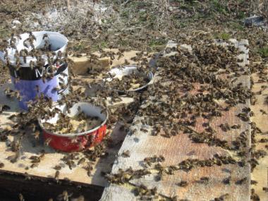 Соевая мука для весенней подкормки пчел, обезжыренная