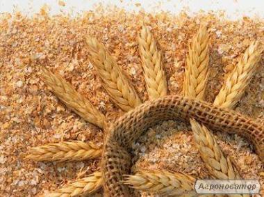 Насіння пшениці, НАСІННЯ ПШЕНИЦІ ТРАНСГЕННИЙ СОРТ ДВОРУЧКА DENTON