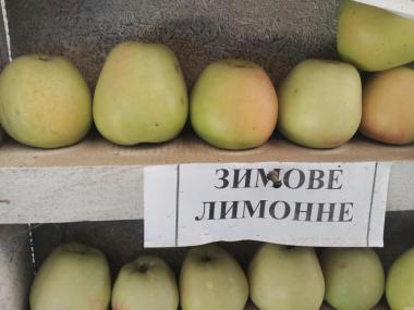 Продам яблука сорту