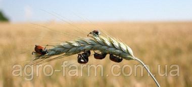 Инсектицид Бестселлер Турбо 200 (5л)