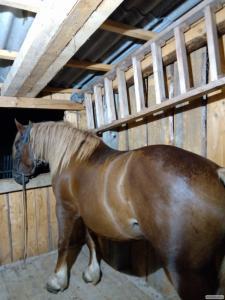Кінь Ваговоз.