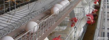 Продам ленту яйцесбора ЛТ-100 (собственное производство)