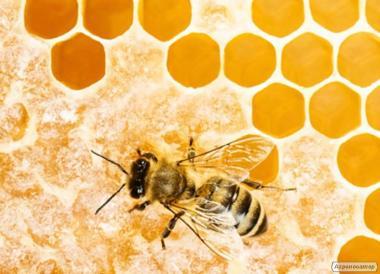 Продам бджоли в Вінницькій області