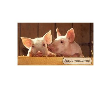 Премиксы для свиней  Премикс для откорма свиней
