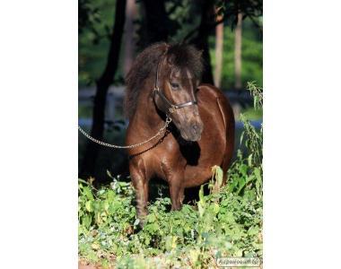кобила поні