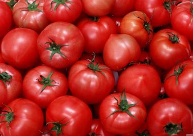 Продам помидор отличного качества