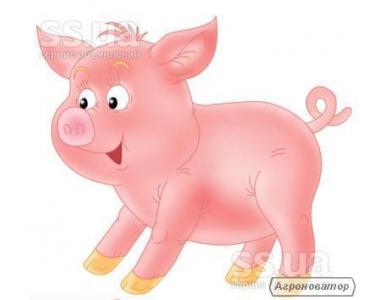Продам    свиней живою вагою, кількість12штук ціна договірні