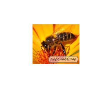 Бджоломатки УКРАЇНСЬКА СТЕПОВА