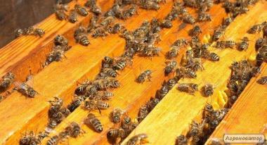 Продам пчелопакеты 130шт
