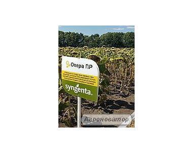 Семена подсолнечника Опера ПР (Syngenta)  импорт