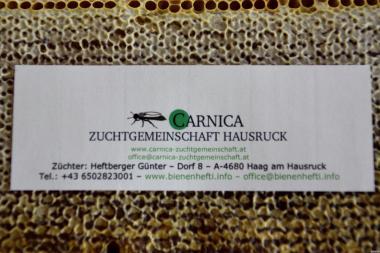 БДЖОЛОМАТКИ  КАРНІКА F1 (Perner & Heftberger) Австрія