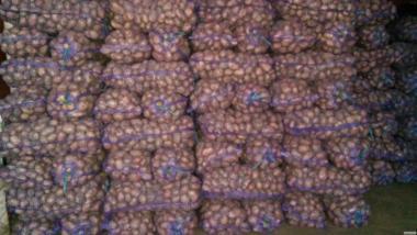 Продам картофель сортов Кармен(Цыганка),Пикассо,Иван да Марья,Фантазия.
