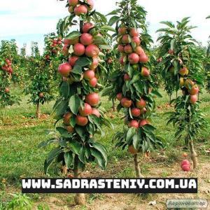 Сад Растений - интернет магазин саженцев | Питомник саженцев в Бахмуте