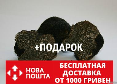 Мицелий чёрного трюфеля гриб Tuber melanosporum семена