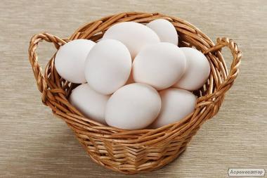 Инкубационное яйцо Ломан Вайт. Куры несушки.