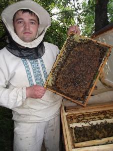 Продам плідні, мічені,високопродуктивні бджоломатки карпатської породи