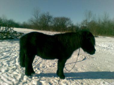 Продається поні кобила.