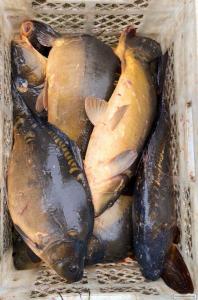 Продажа живой рыбы открыта!!!