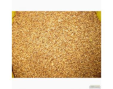 Семена высокоурожайных сортов  кориандра. Жмите!