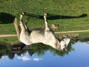 Продам коня під сідло