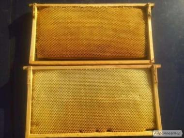 Продам сушь пчелинную , соторамки , соты для пчел пчелопакет