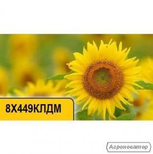 Семена подсолнечника 8X449КЛДМ