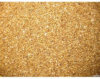 Коріандр насіння