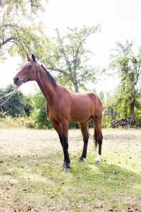 Продам гнідого коня, 1992 р