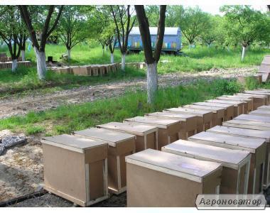 Пчелопакеты Карпатка 2017г с доставкой по Украине