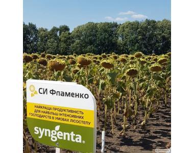 Насіння соняшнику СІ Фламенко (Syngenta)