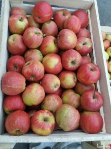 Породам яблука з молодого саду