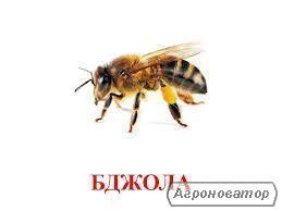Терминоов продам пчелу Карпатку