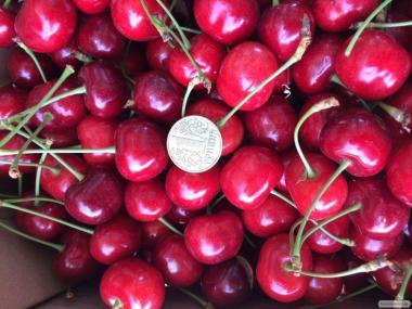 продам урожай черешни