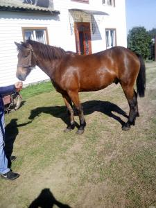 Продам доброго коня вік 4 роки