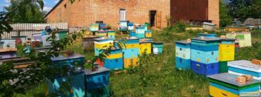 Продам бджолосім'ї української степової(після обльоту)
