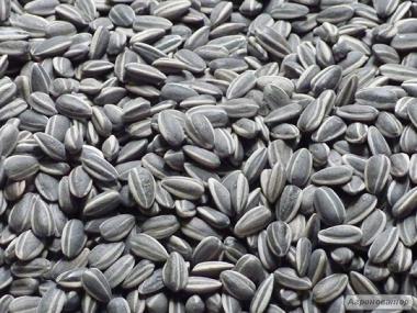 Продам семена подсолнуха