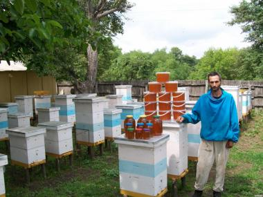 Продам пчелосемьи, пчела Карника F1 – 2020г.