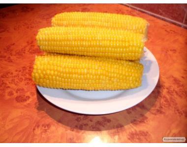 Цукрова кукурудза заморожена в качанах і зерні