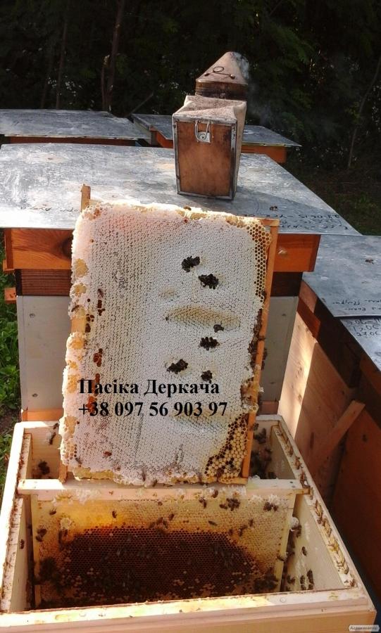 Продам натуральный мед с липы, разнотравье, лесной