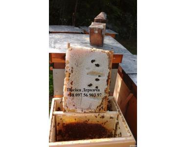 Продам натуральний мед з липи, різнотрав'я, лісовий