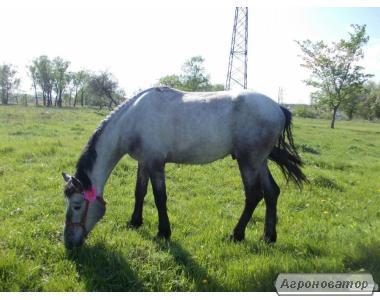 Продам коня 4 года с документами