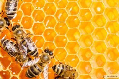 Продам бджолопакети 2019год. Продам карпатських бджіл 4-х рам дадан .
