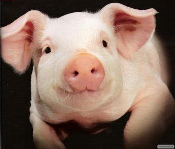 Органічне м'ясо свинини