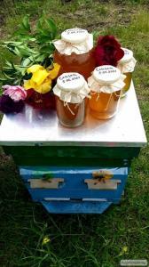 Пчелосемьи,пакеты,матки Карпатской породы 2017