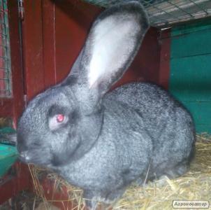 Розпродаж кроликів різних порід.