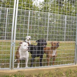 Зоотовари для собак