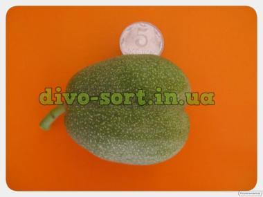 Продам саженцы крупноплодного и вкусного грецкого ореха